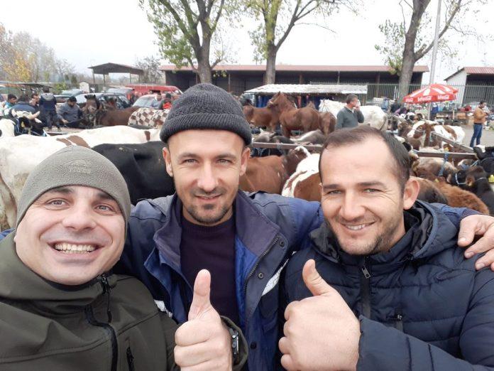 Цени на жив добиток на сточните пазар низ Македонија