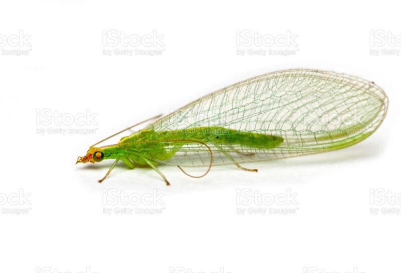 Корисни инсекти