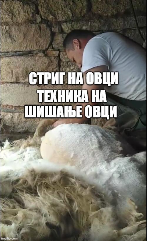 Стриг на овци