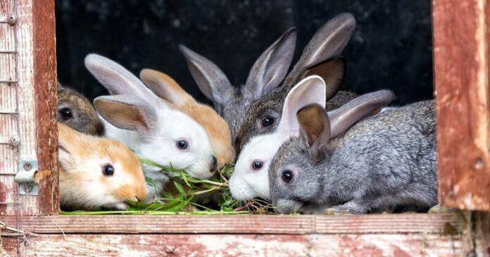 зајаците
