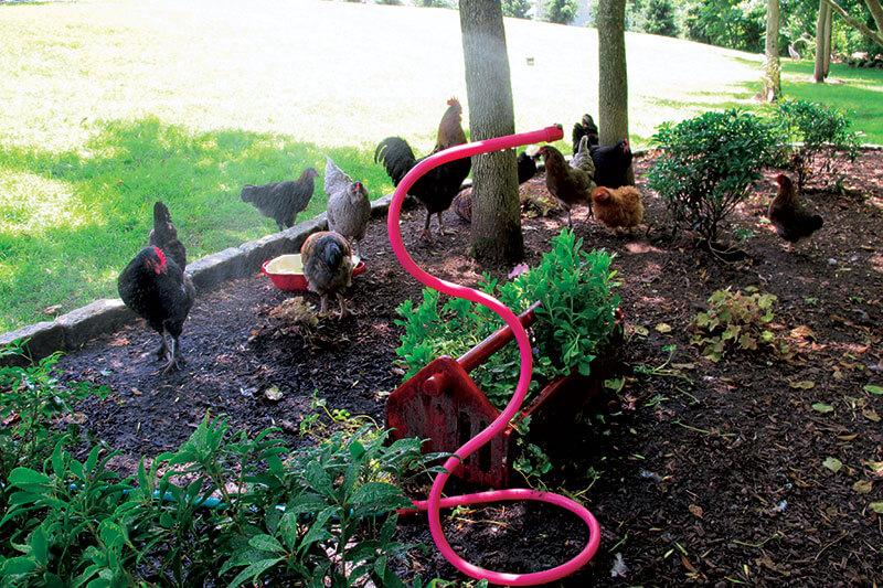 Одгледување кокошки